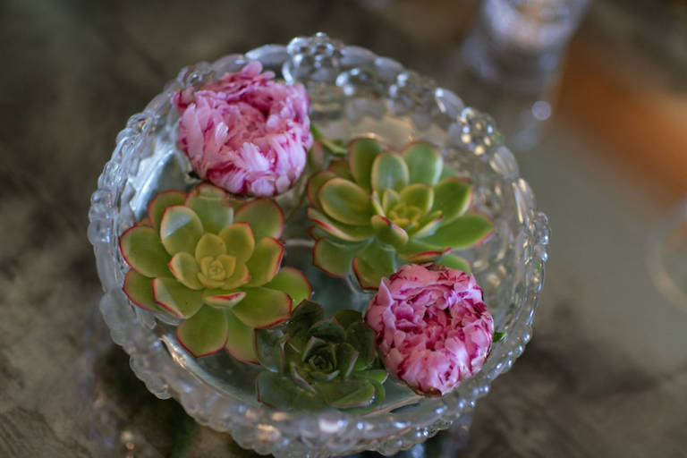 succulents in water